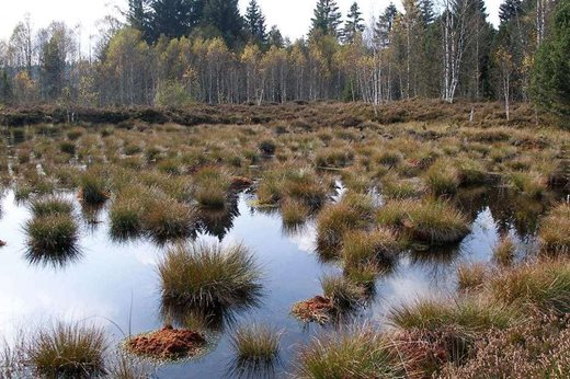 Scottish and UK governments have no records on commercial peat digging